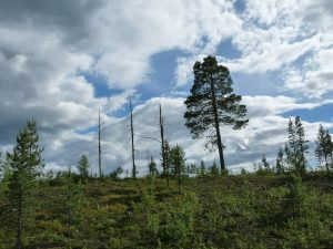 Zero Deforestation - Norway becomes first country in the world to commit