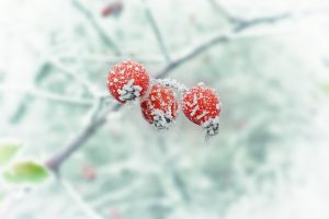 Frost Prediction: How to Save Your Garden