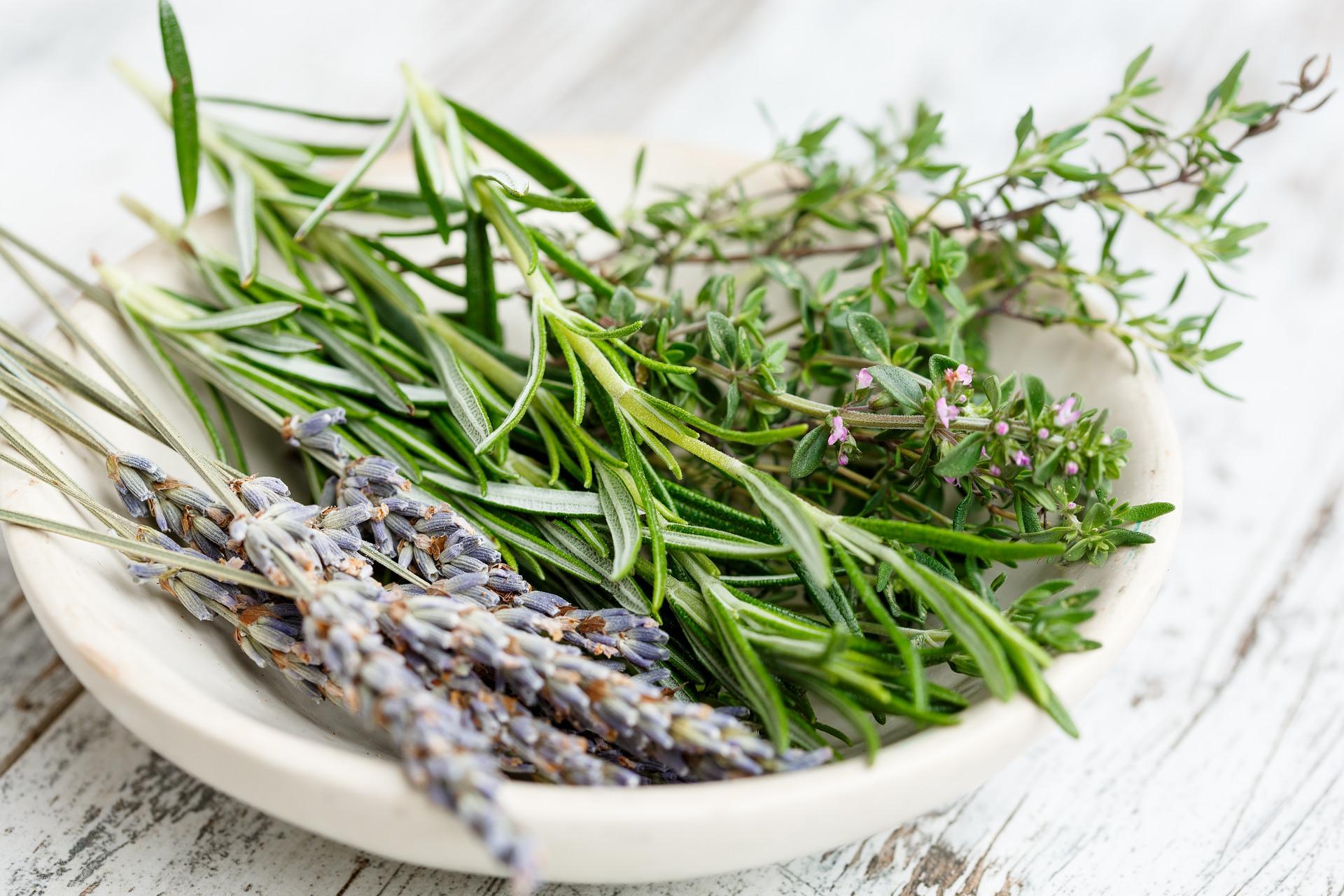 9 Herbs That Boost Memory, Focus & Brain Health