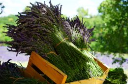 10 Healing Plants You Can Find In Your Own Backyard