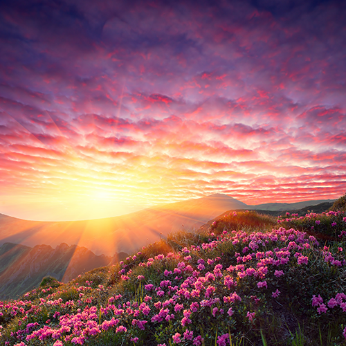 Daybreak, casting its nurturing energy on the valley of flowers below